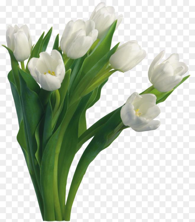 Flower Bouquet White Tulip Free Png Image Flower Bouquetflower