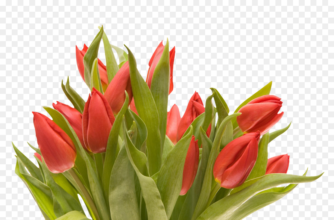 Flower Bouquet Tulip Cut Flowers Floral Design Free Png Image