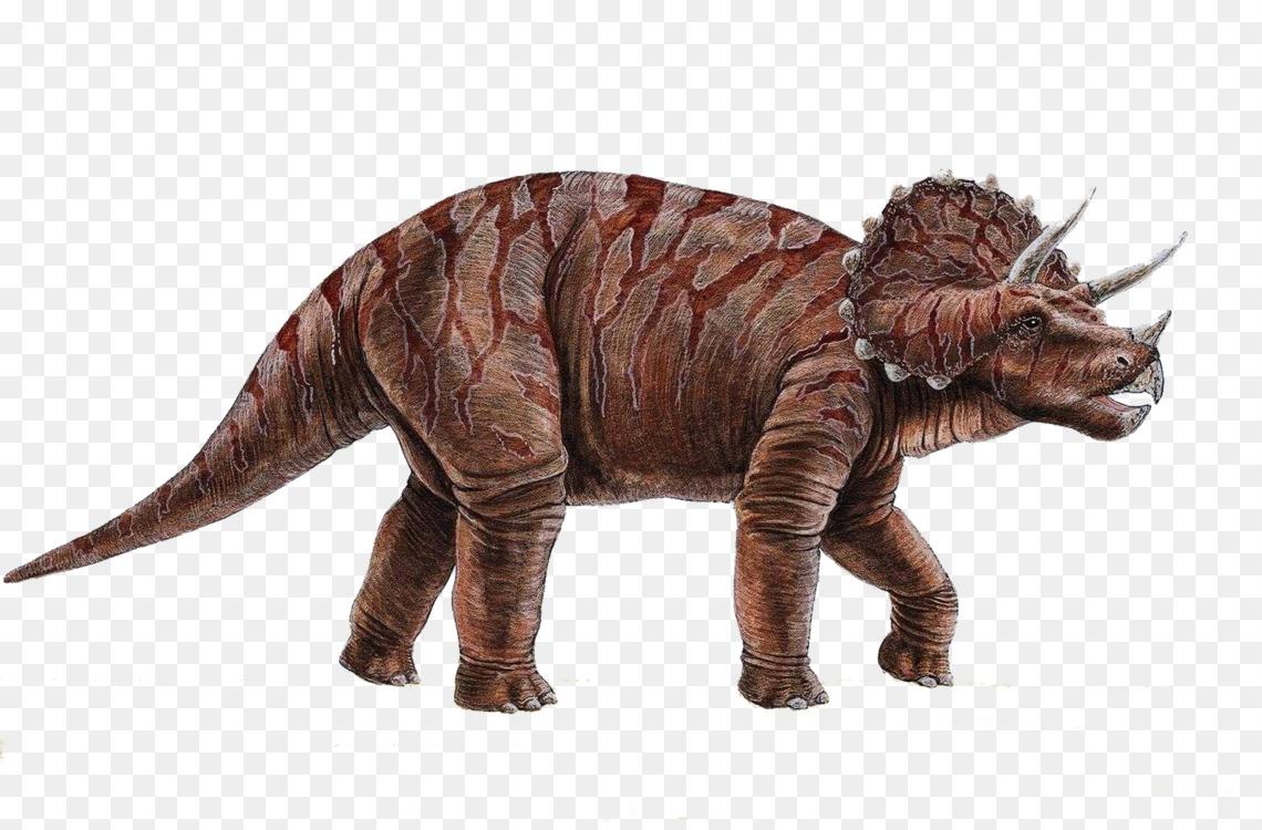 triceratops triceratops ornithischian dinosaurs torosaurus free png
