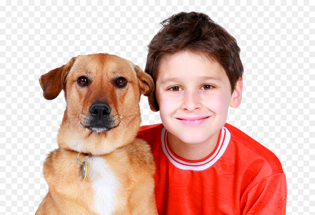 Labrador Retriever Puppy Service dog Cat Dog training