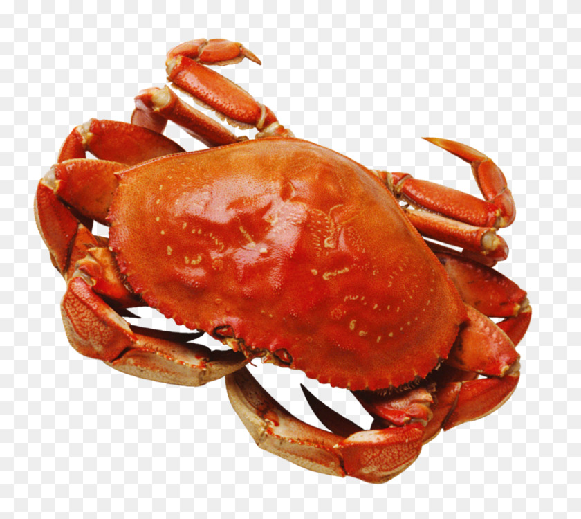 Red king crab Decapods Computer Icons Crustacean