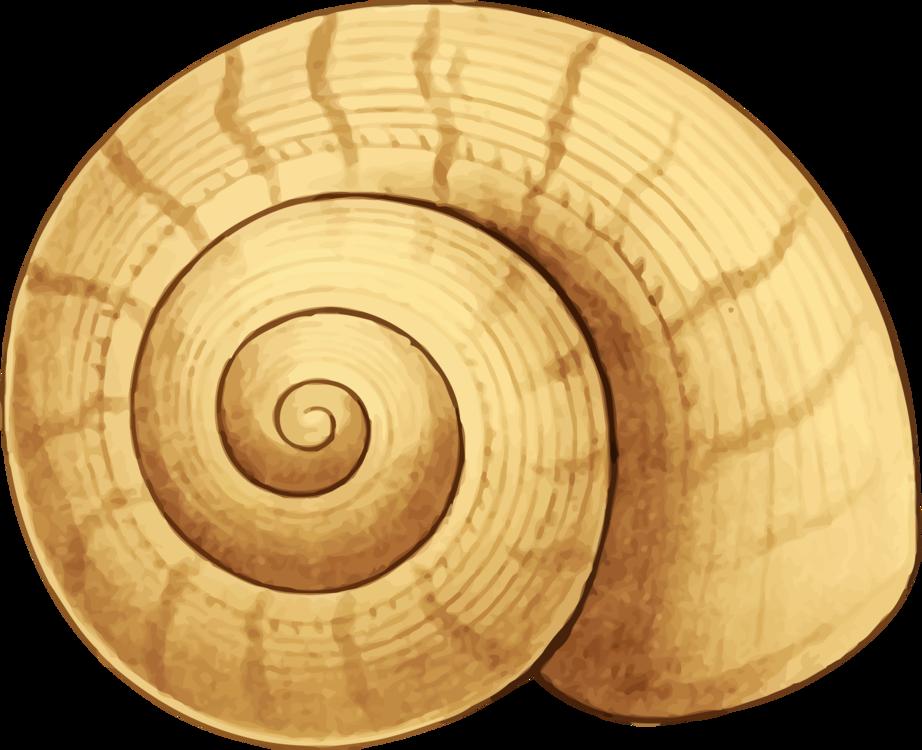 Nautilida,Snail,Spiral