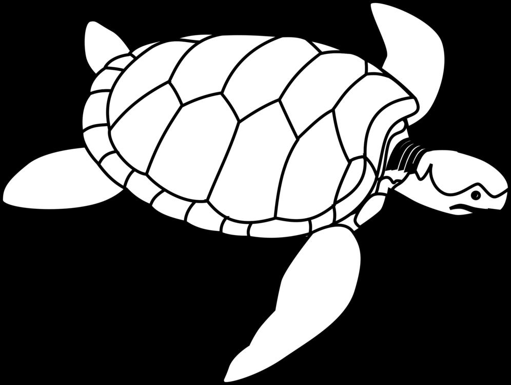 Turtle,Line Art,Reptile