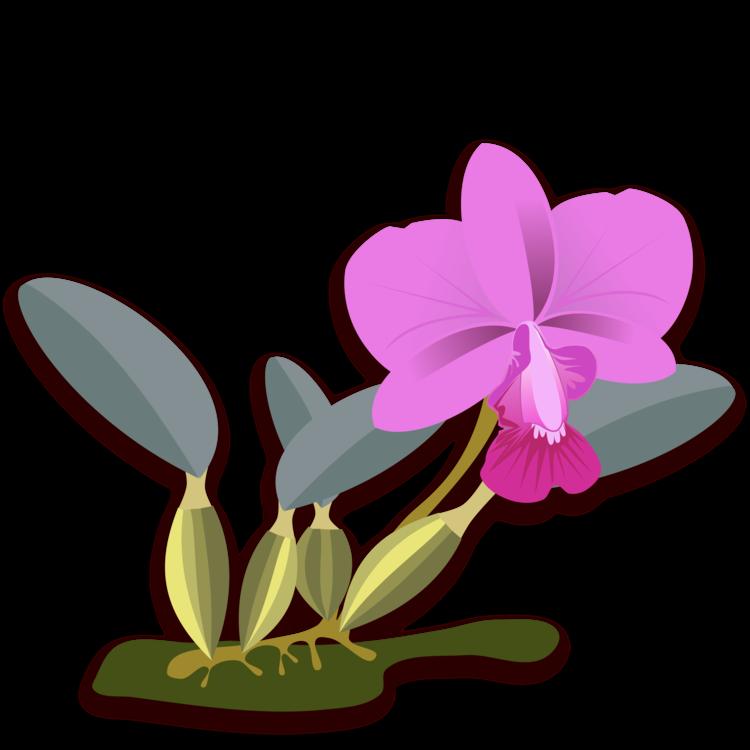 Plant,Flora,Seed Plant