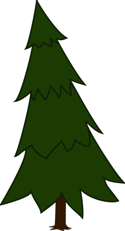 Christmas Ornament,Beak,Conifer