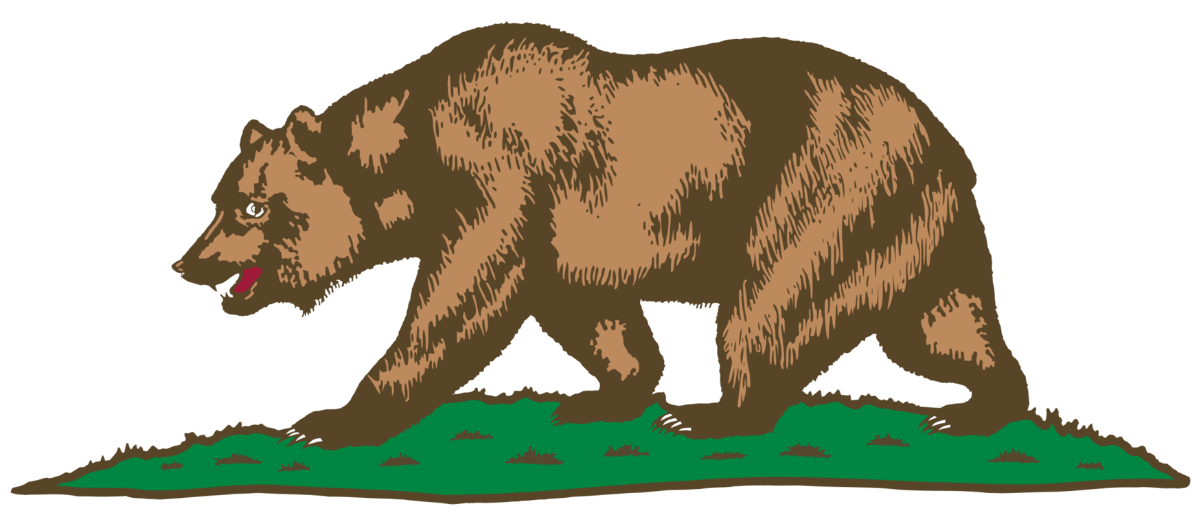 California Grizzly Bear Drawing
