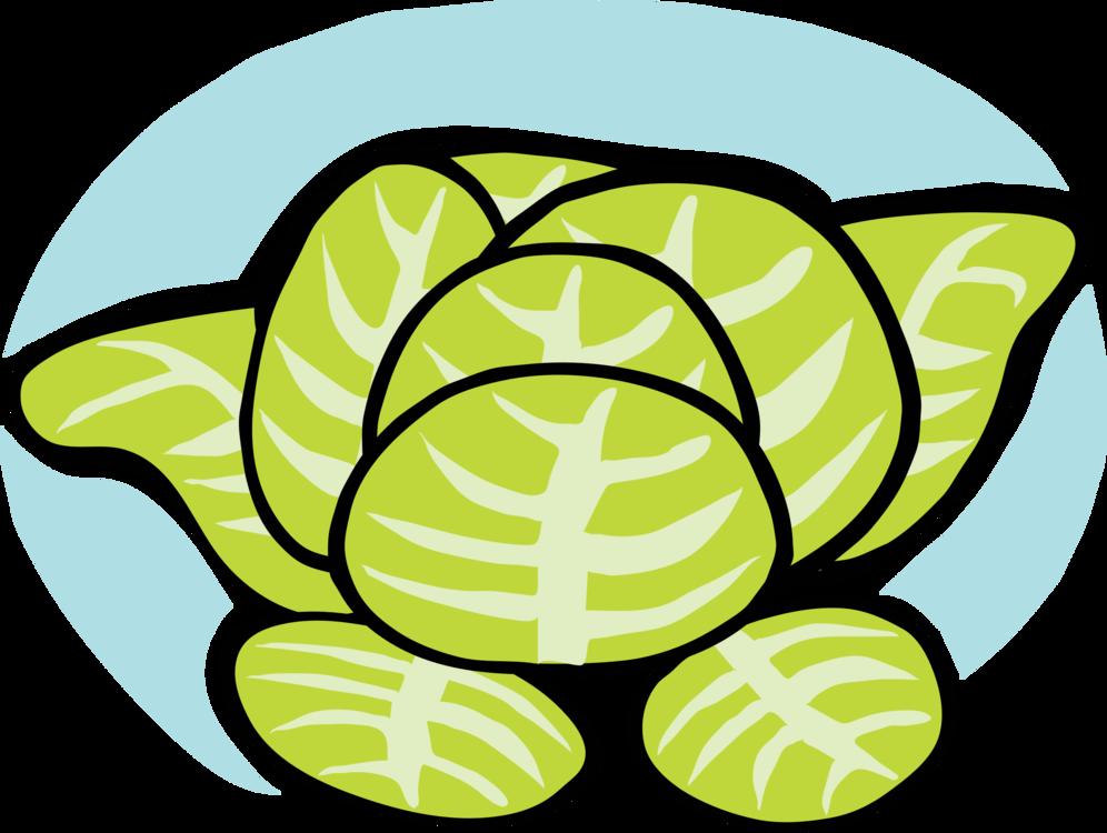 Turtle,Reptile,Symmetry