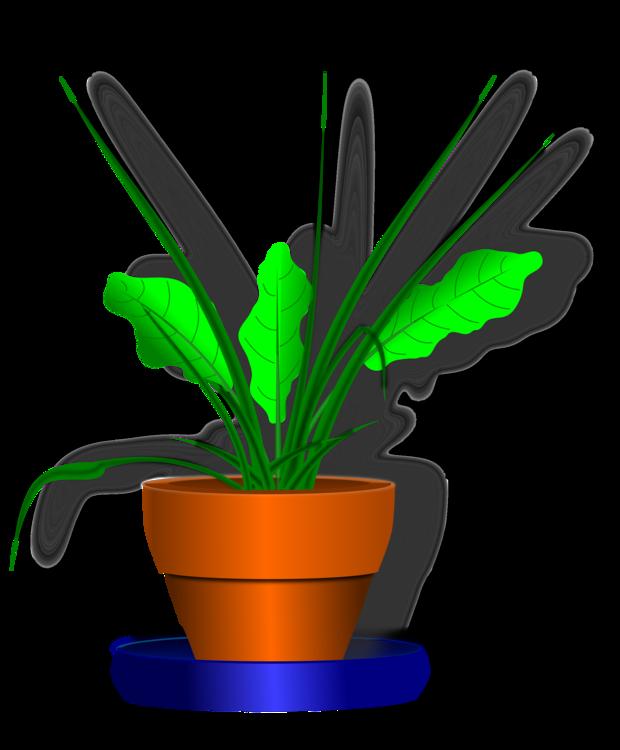 Plant,Leaf,Flowerpot