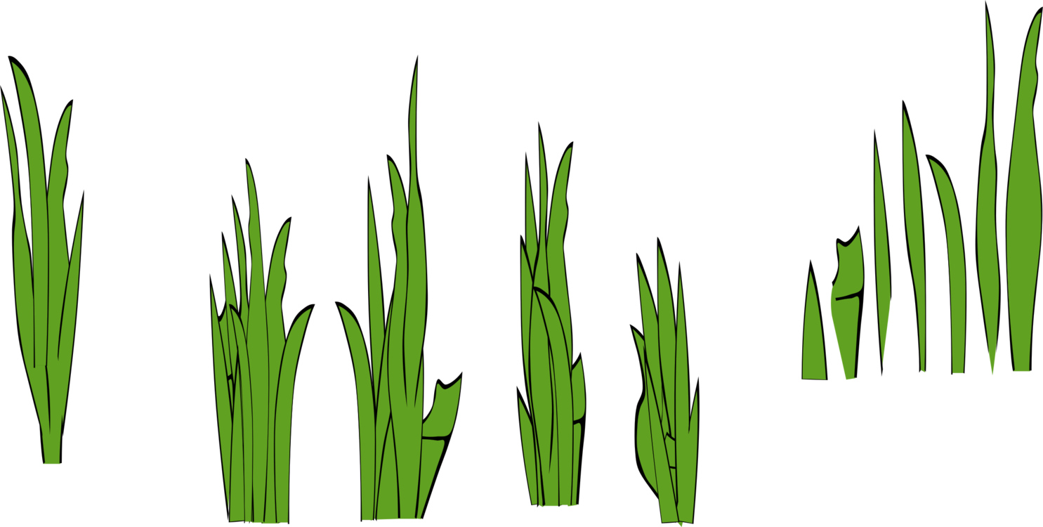 Plant,Leaf,Commodity