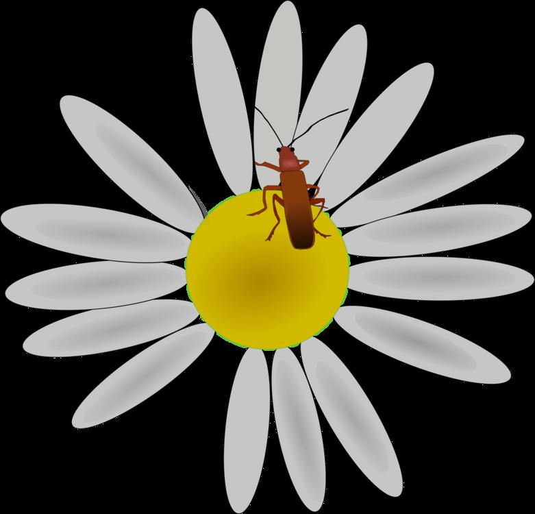 Pollen,Flower,Honey Bee