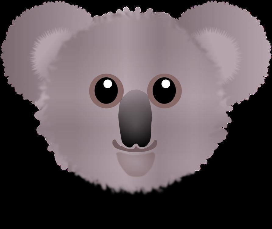 Rodent,Head,Koala