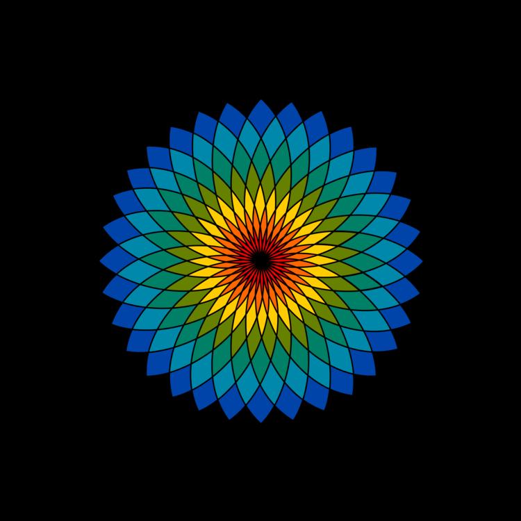 Flower,Symmetry,Sunflower