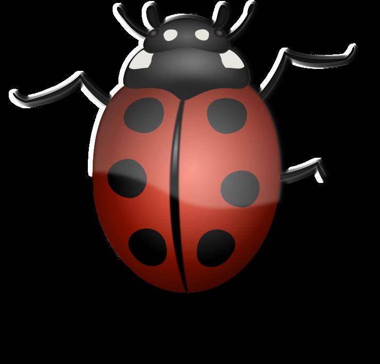 Ladybird,Invertebrate,Arthropod