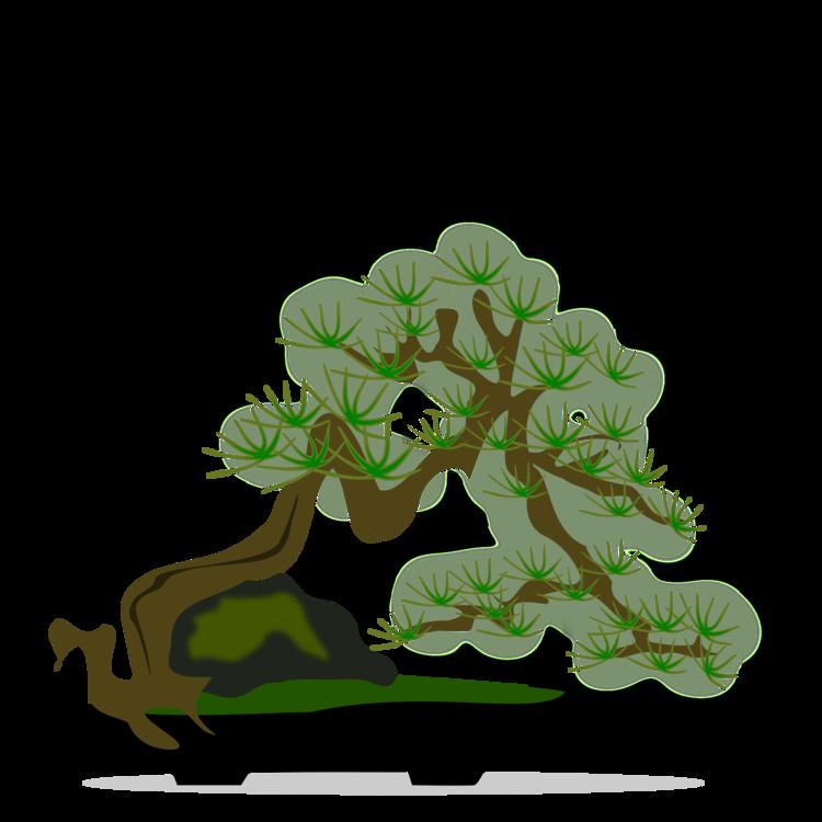 Bonsai,Pine Family,Plant