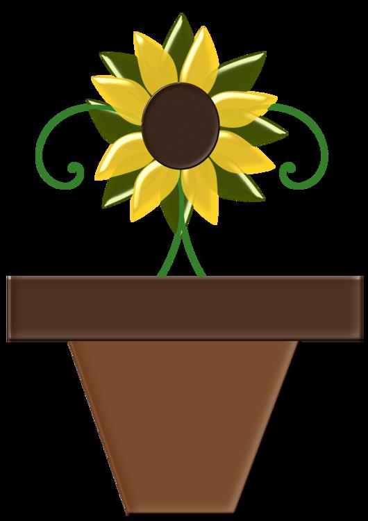 Plant,Flower,Sunflower