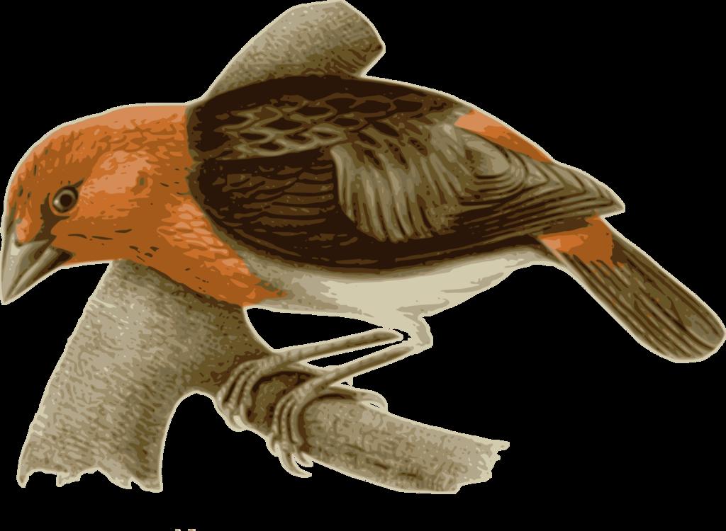 Water Bird,Beak,Wing