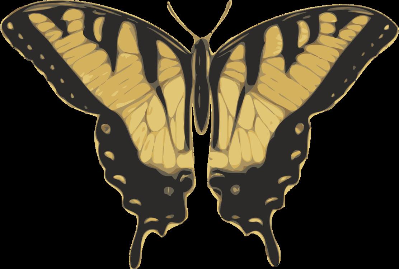 Butterfly,Bombycidae,Moth