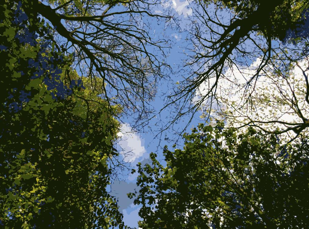 Computer Wallpaper,Biome,Leaf
