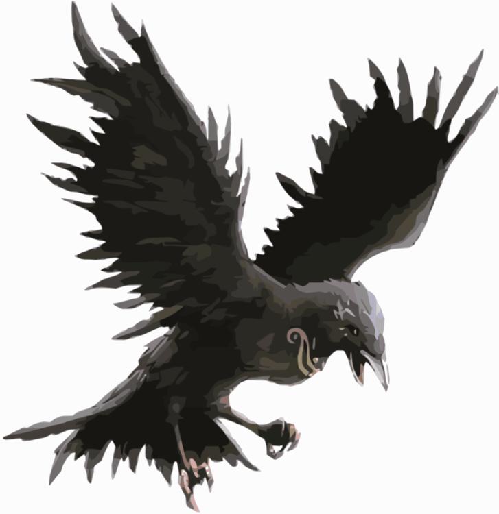 Bald Eagle,Eagle,Wildlife