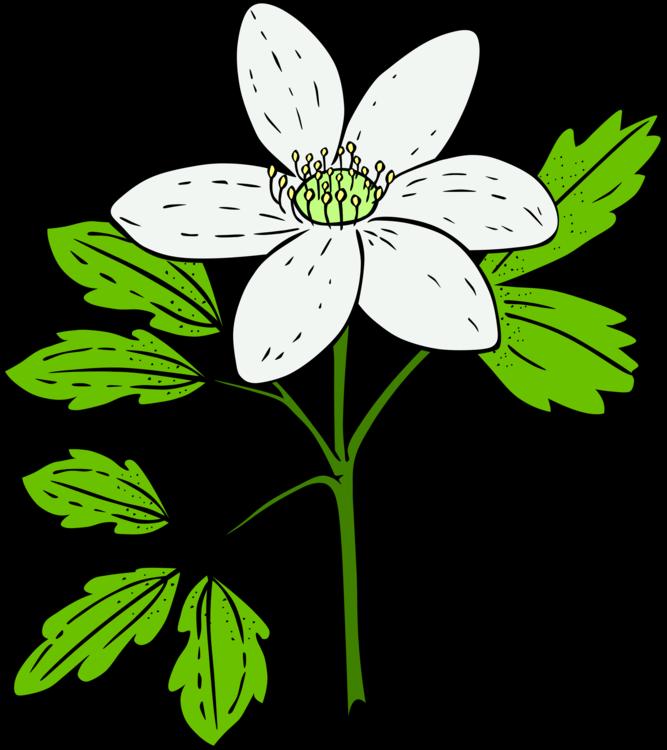 Symmetry,Petal,Cut Flowers