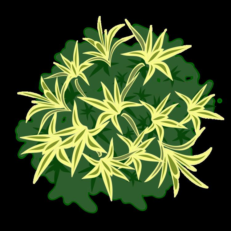 Plant Stem,Plant,Flower