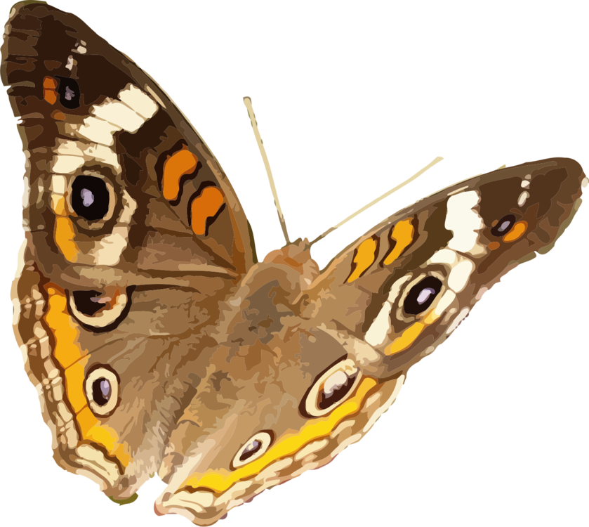 Butterfly,Moth,Pollinator