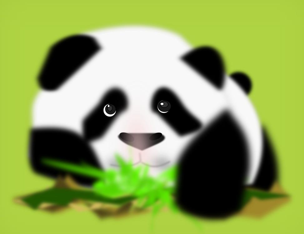 Red Panda,Giant Panda,Carnivoran