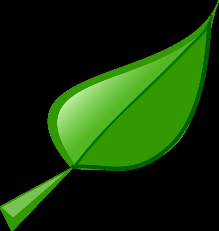 Plant,Leaf,Green