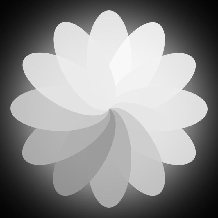 Flower,Monochrome Photography,Petal