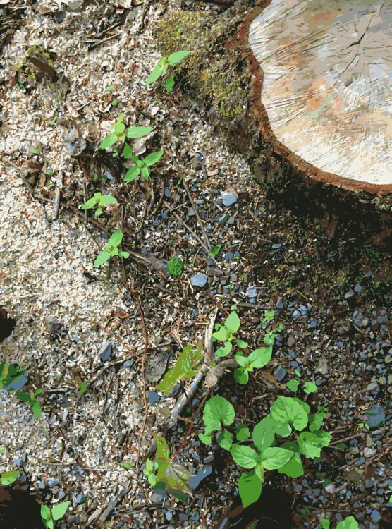 Plant,Soil,Tree