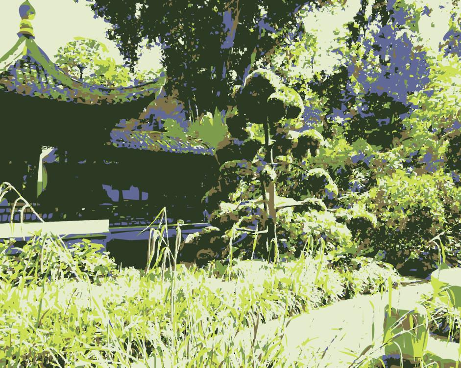 Lawn,Plant,Flora