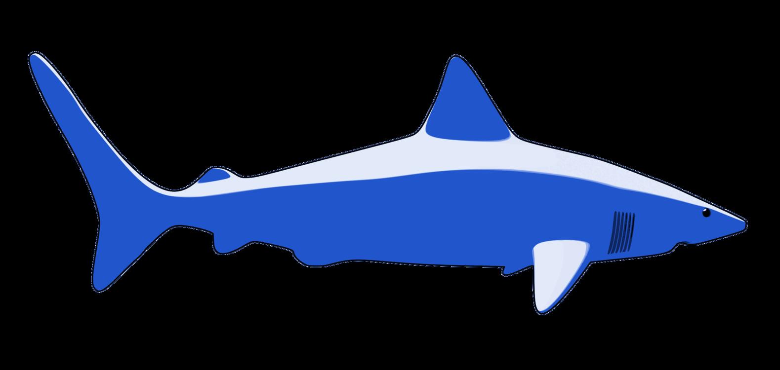 Marine Biology,Shark,Organism