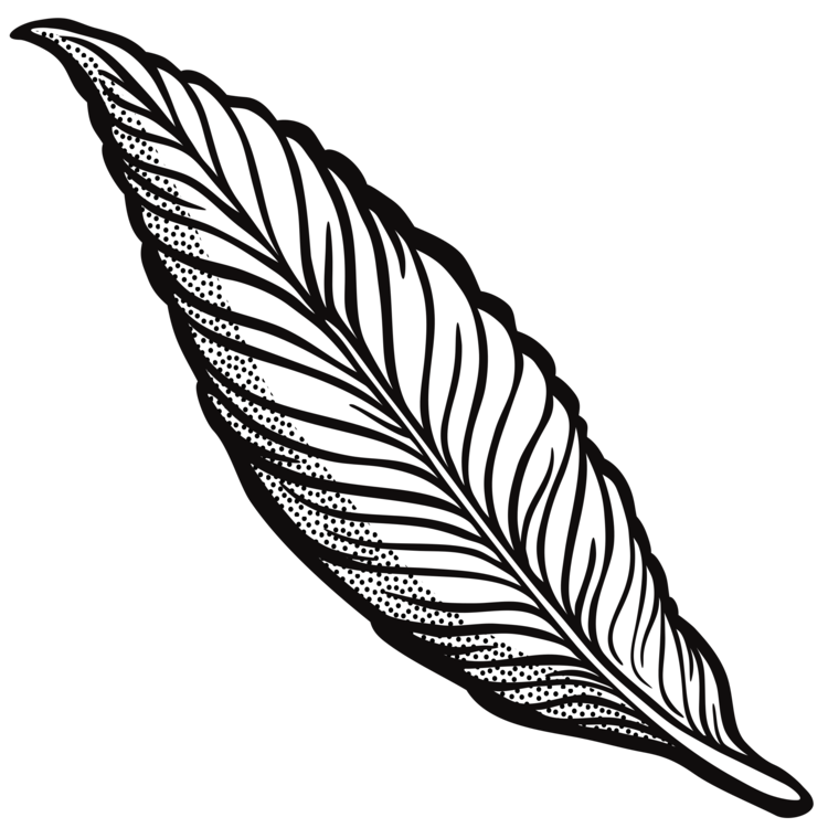 feather drawing line art quill cartoon free commercial clipart rh kisscc0 com quill picture clipart feather quill clipart