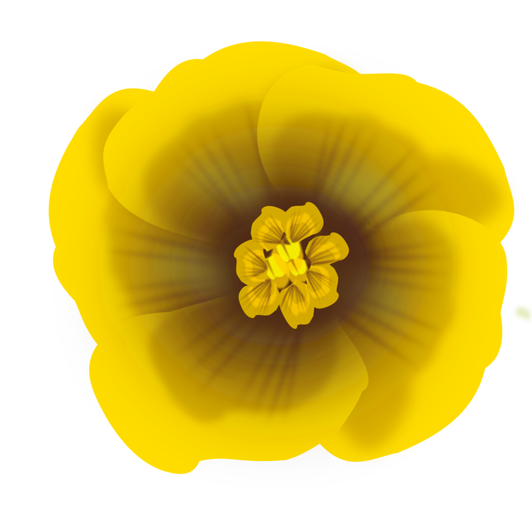Computer Icons Yellow Flower Drawing Download Free Commercial