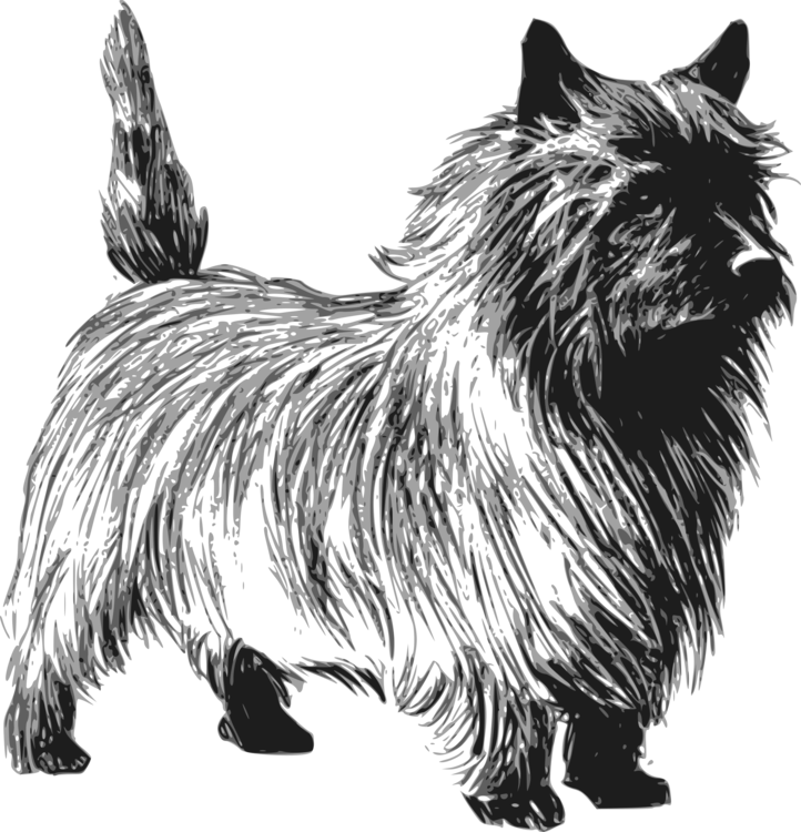 cairn terrier toto bull terrier terry free commercial clipart