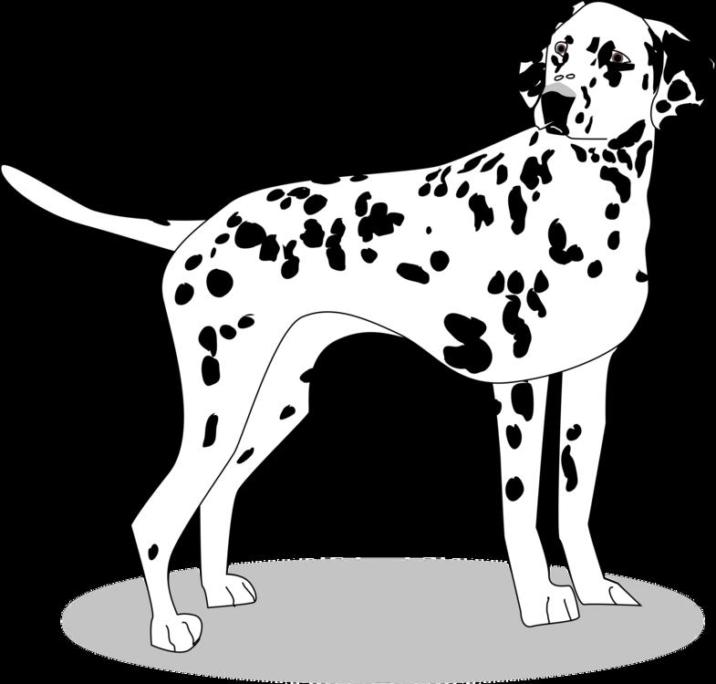 Monochrome Photography,Carnivoran,Dog Breed