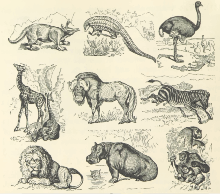 Terrestrial Animal,Art,Carnivoran