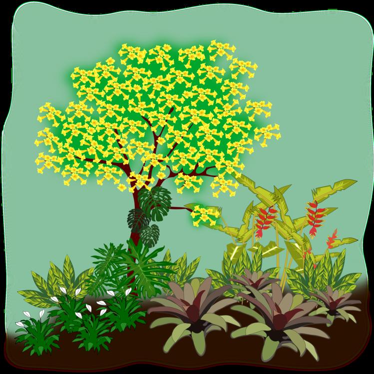 Evergreen,Plant,Shrub