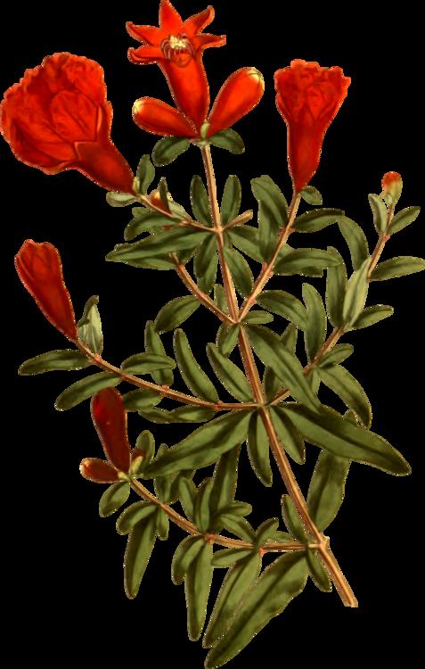 Plant,Flora,Shrub