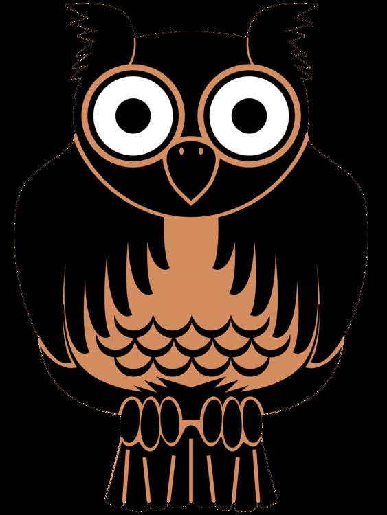 Owl,Snout,Vision Care
