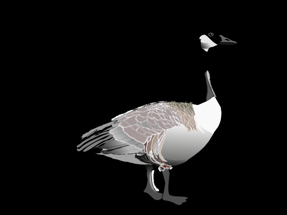canada goose duck bird domestic goose free commercial clipart