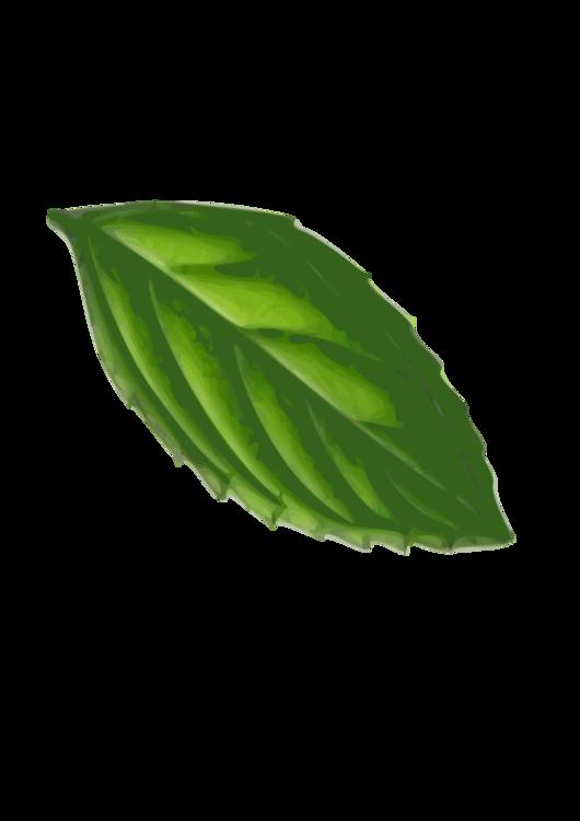 Herb,Plant,Leaf