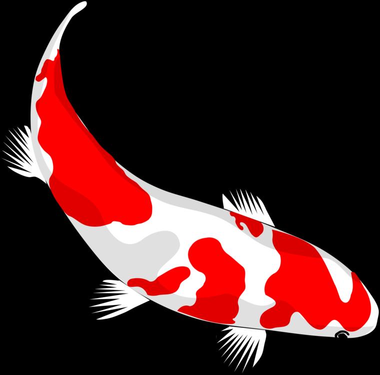Fish,Wing,Marine Mammal