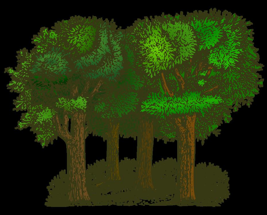 Biome,Plant,Shrub