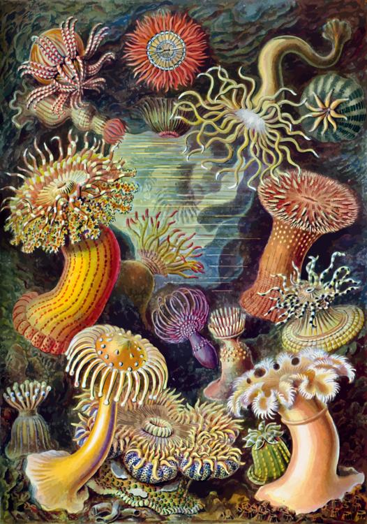 Marine Invertebrates,Marine Biology,Stony Coral
