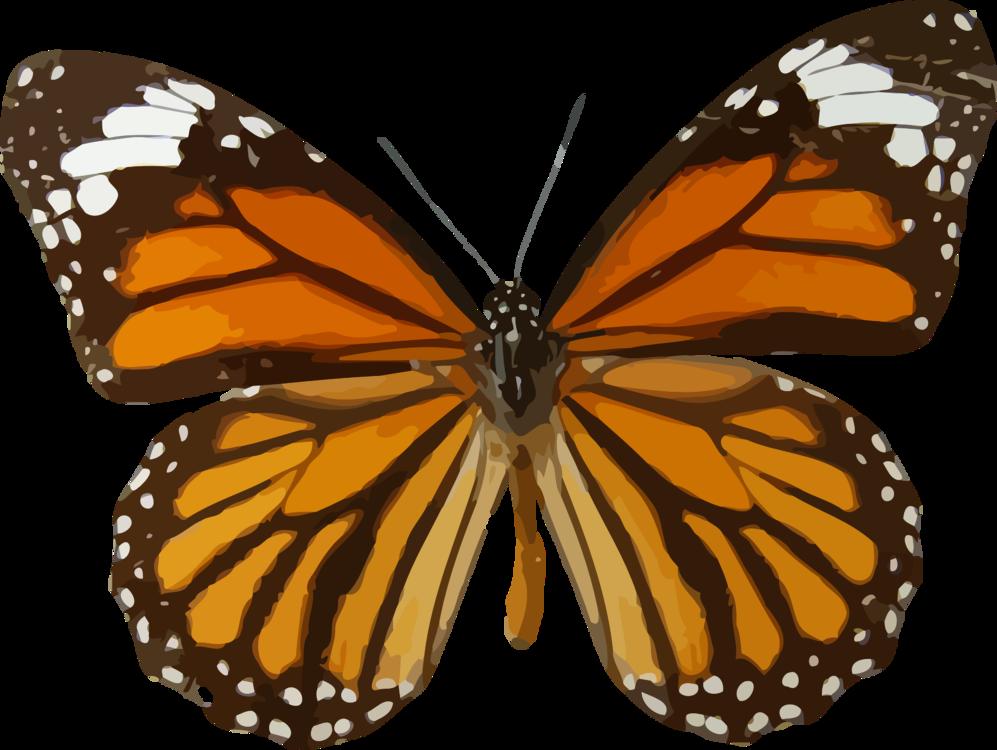 Butterfly,Symmetry,Pollinator