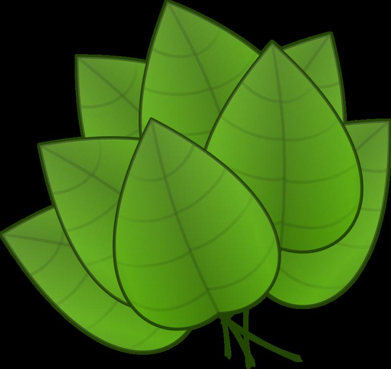 Green,Plant,Leaf