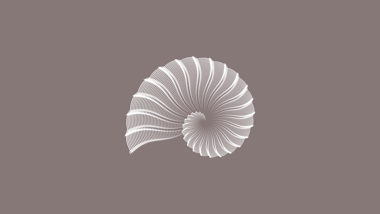 Nautilida,Close Up,Spiral
