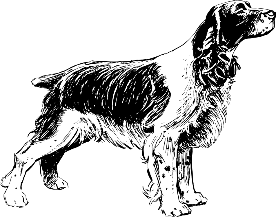 English Springer Spaniel,Russian Spaniel,Paw