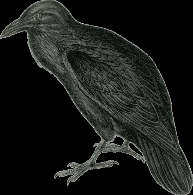Crow Like Bird,Rook,New Caledonian Crow